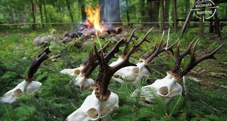 Premiere roe buck hunting 2014