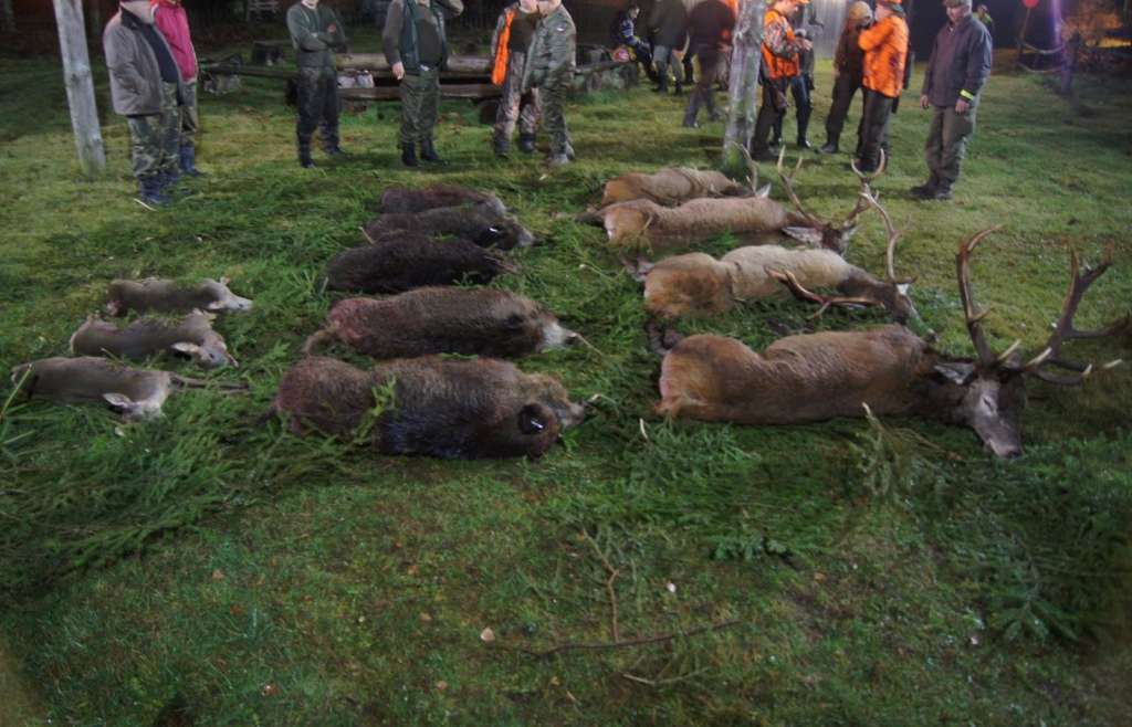 Driven hunts 2013 with Ultimate Hunting